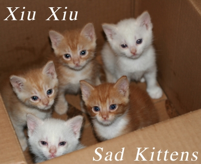 A fake album cover for Xiu Xiu, featuring sad kittens in a box.